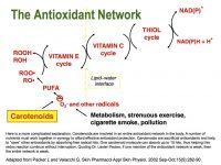 Antioxidant-Network-1024×768